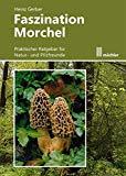 Fazination Morchel von Heinz Gerber