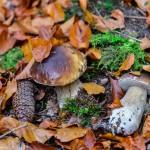 Pilze & Wildkräuter WE im Oktober