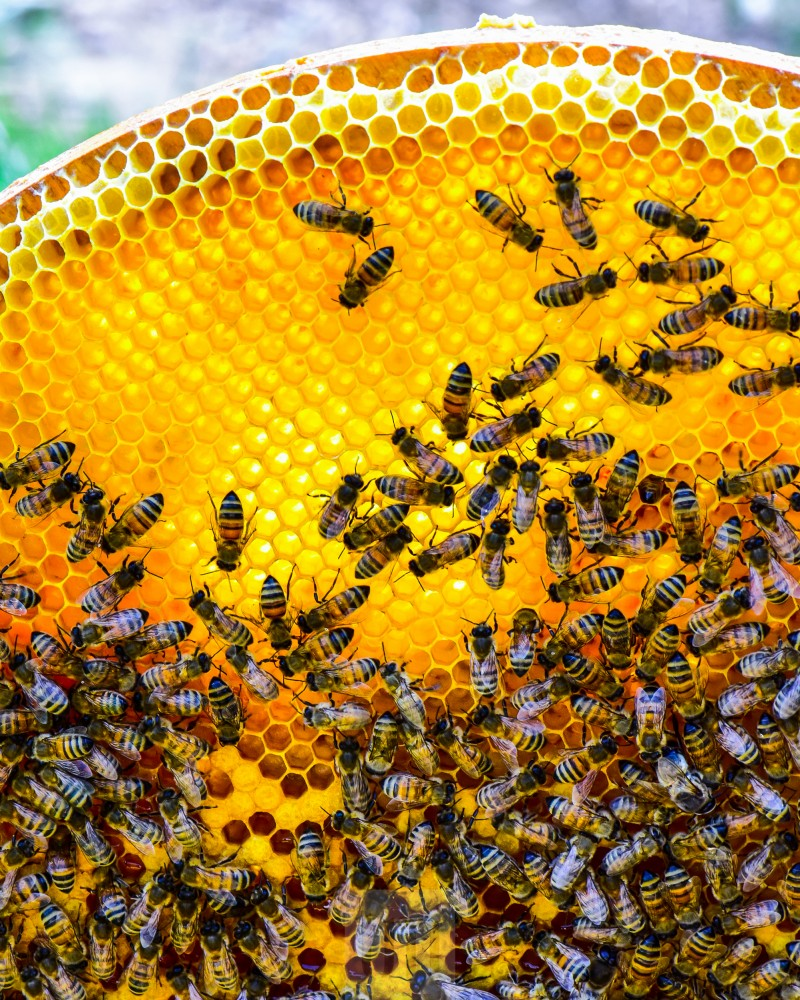 Honig Bienen Workshop