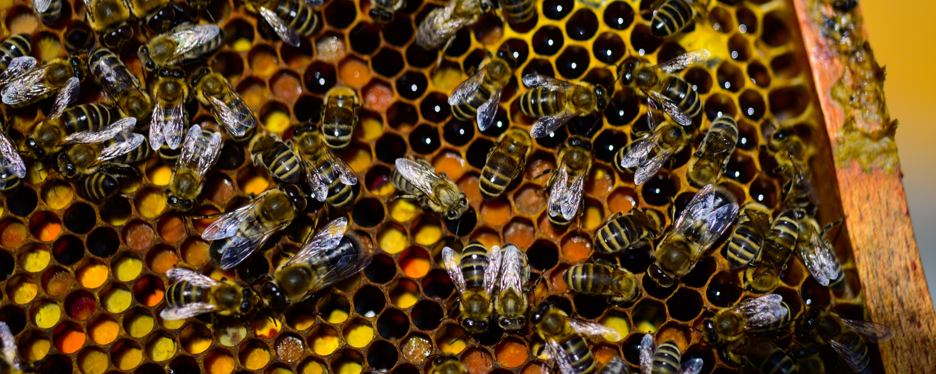 Bienen Workshop